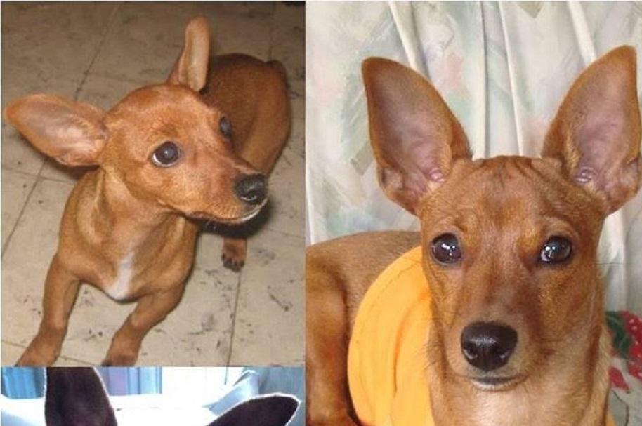 Perro extraviado en Medellín - Pulzo.com
