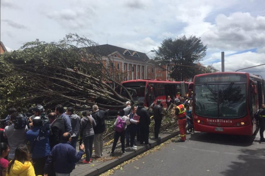 Congestión vehicular por la caída de este árbol