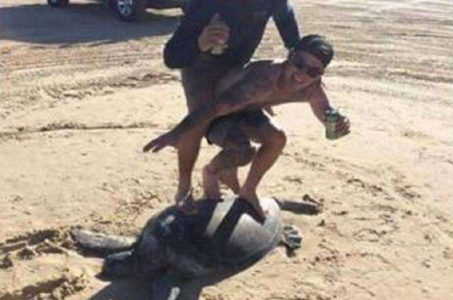 Hombres surfeando sobre tortuga.