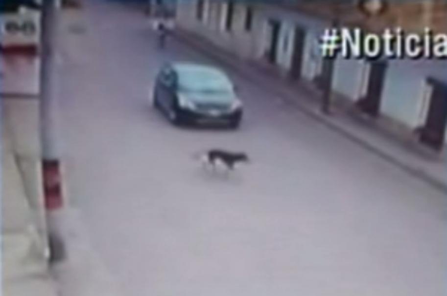 Captura del video donde se muestra cuando el perro es atropellado