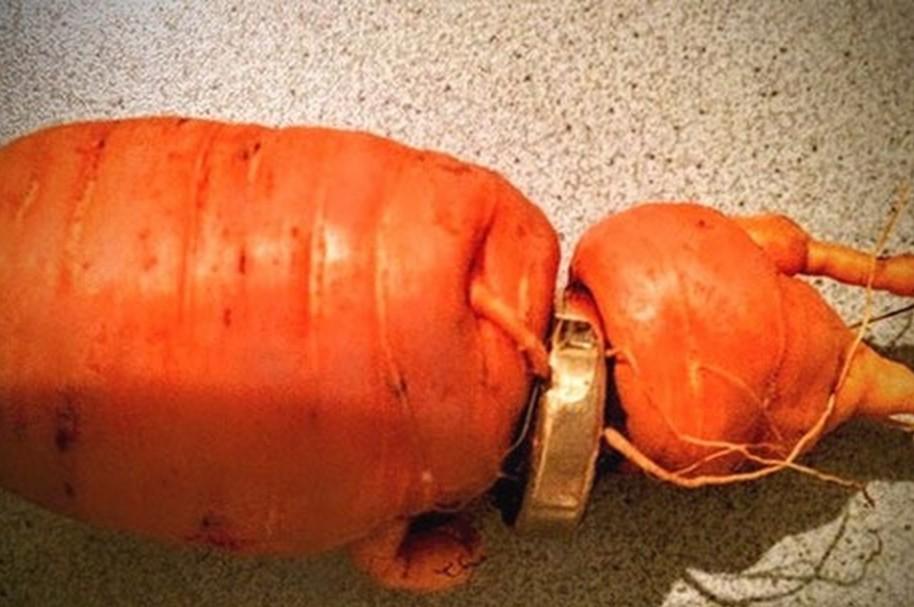 Anillo en zanahoria
