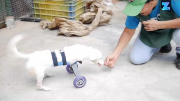 Perrito logró caminar con carro ortopédico que le donaron. Pulzo.com