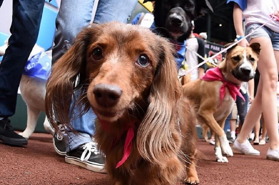 Perros envenenados en Usme