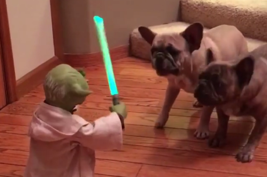 Perros se enfrentaron al maestro Yoda