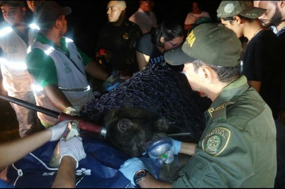 Rescate de chimpancé
