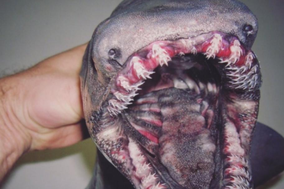 Pez monstruoso capturado en Rusia. Pulzo.com