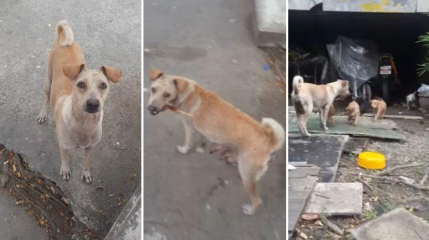 Perrita se 'quitó el pan de la boca' para dárselo a sus cachorros.