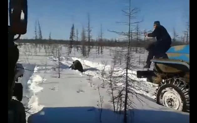 Hombres atropellan varias veces a oso.