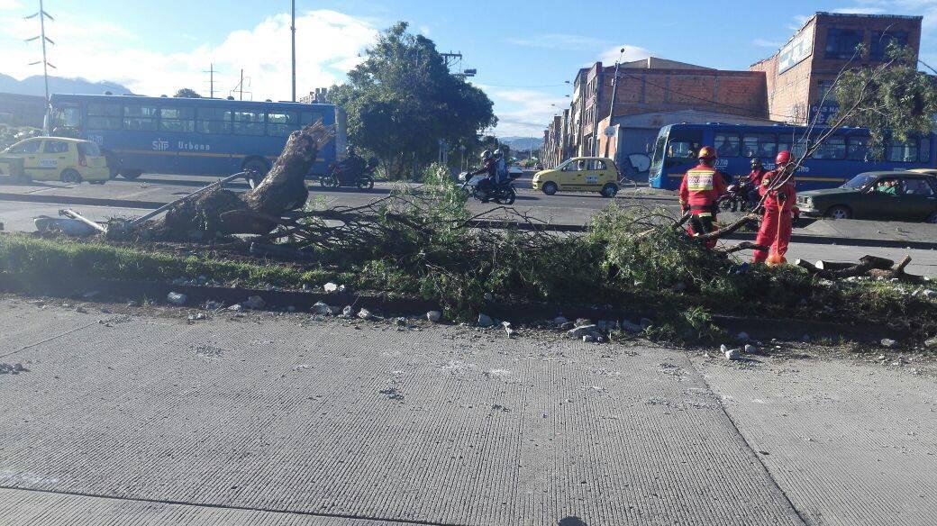 Árbol derribado por Transmilenio