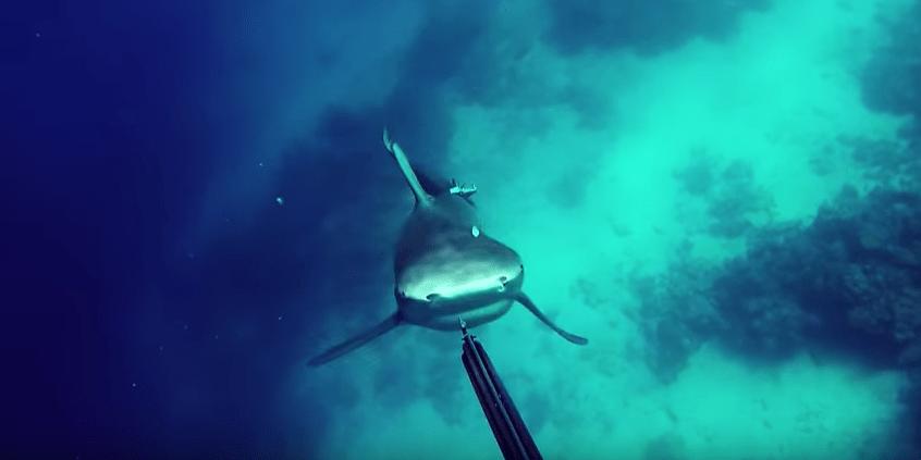 Tiburón ataca a buceador. Pulzo.com