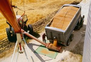 Almacenamiento de grano