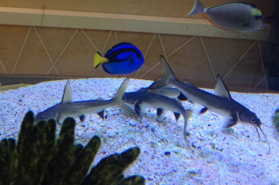 Animales marinos de Atlantis