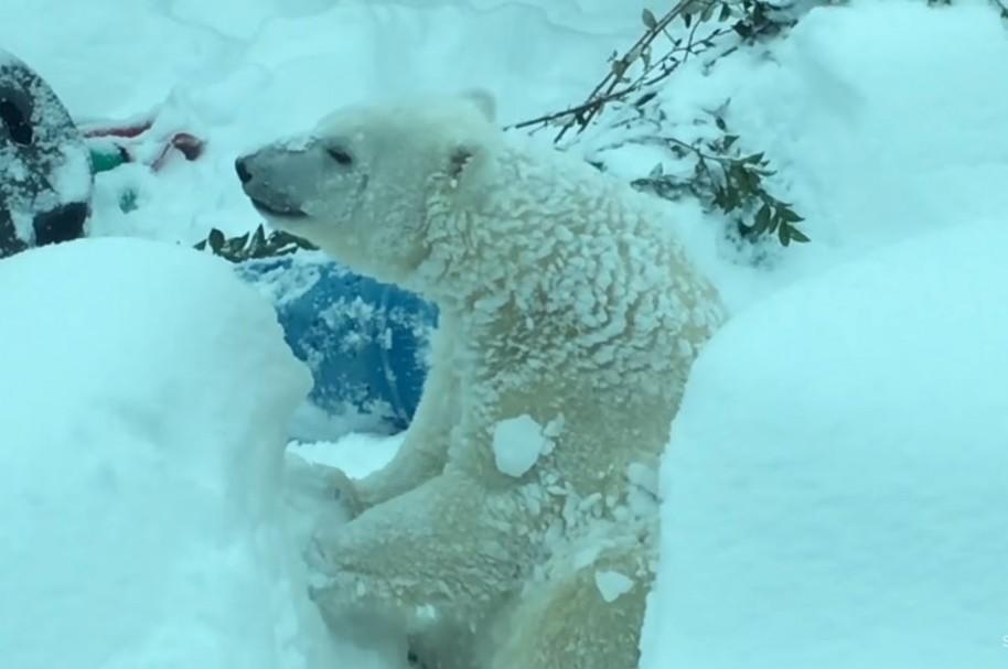 Oso Polar Zoológico Oregon