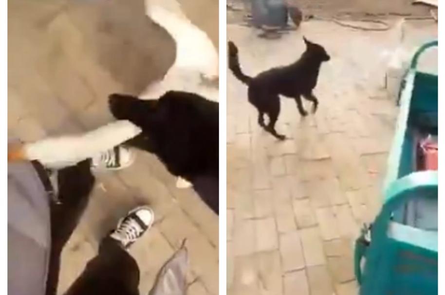 Perro defiende a su dueño de enfurecido ganso. Pulzo.com