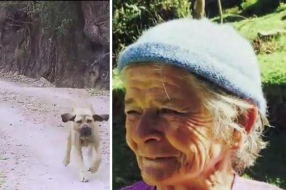 Perros incautados por causar la muerte de Carmen Torres