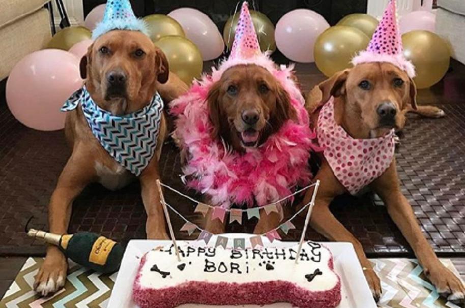 Cómo organizar un cumpleaños para perros