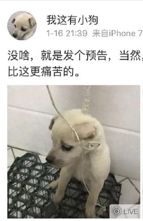 Cachorro estrangulado
