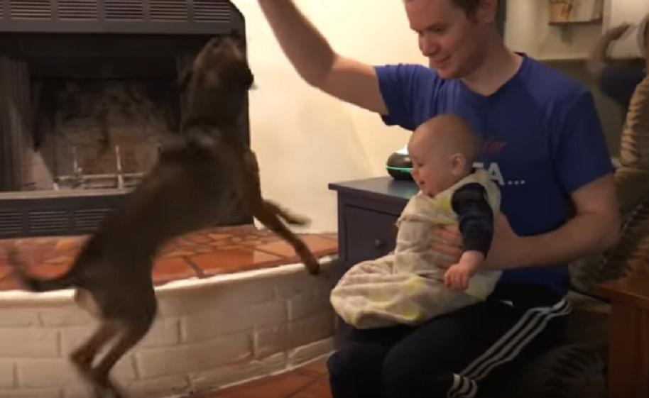 Perro salta y hace reír a bebé