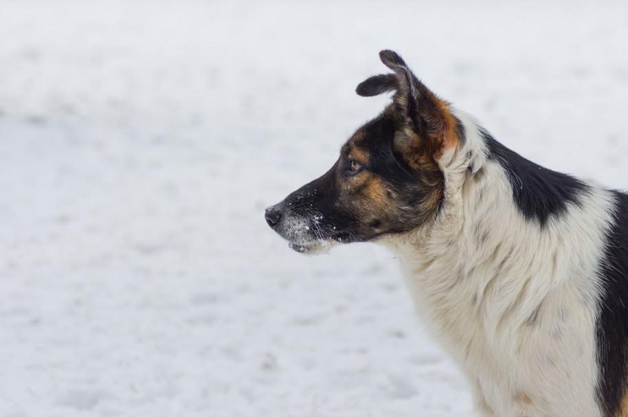 Perro en medio de la nieve. Pulzo.com