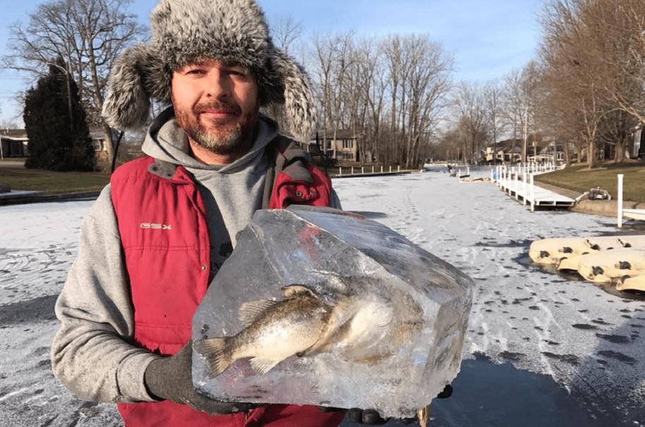 Pez devoraba a otro, pero quedó congelado en el intento