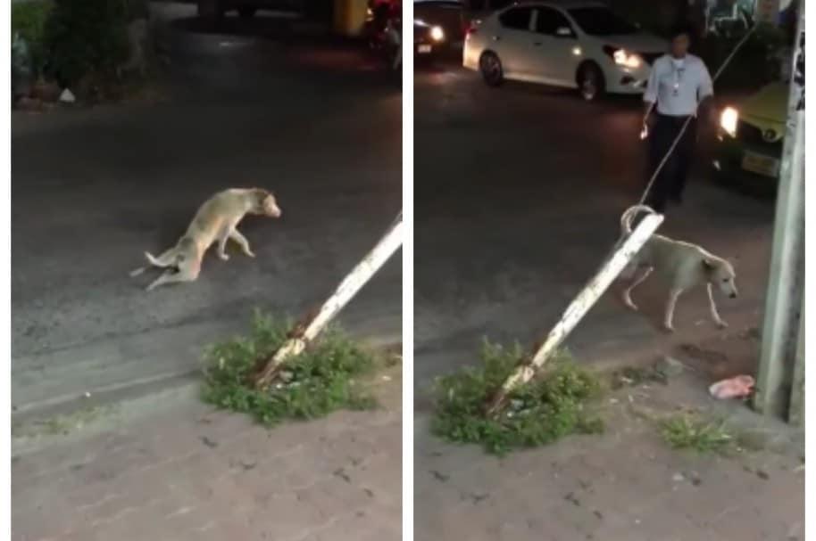 Perro se arrastra por una vía. Pulzo.com
