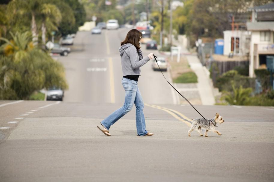 Mujer camina con su perro. Pulzo.com