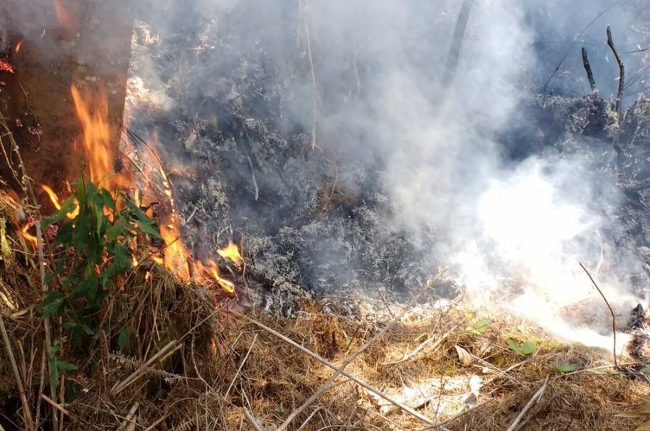 Incendio forestal en La Ceja