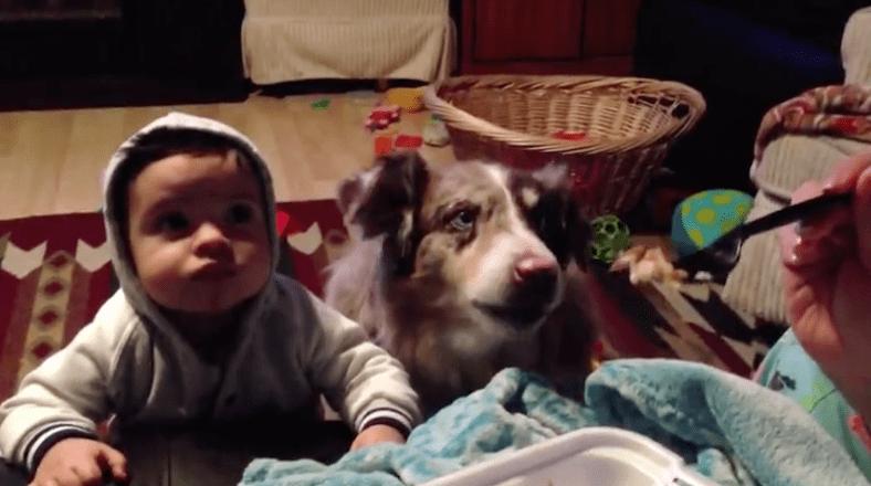 """Perro que dice """"mamá"""". Pulzo.com"""