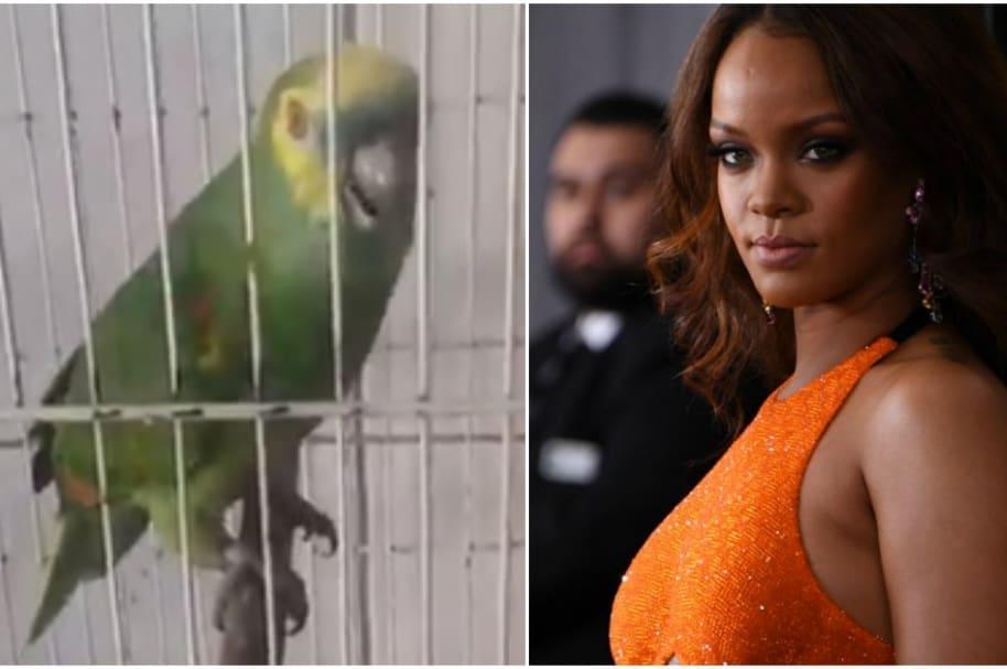 Loro canta como Rihanna.