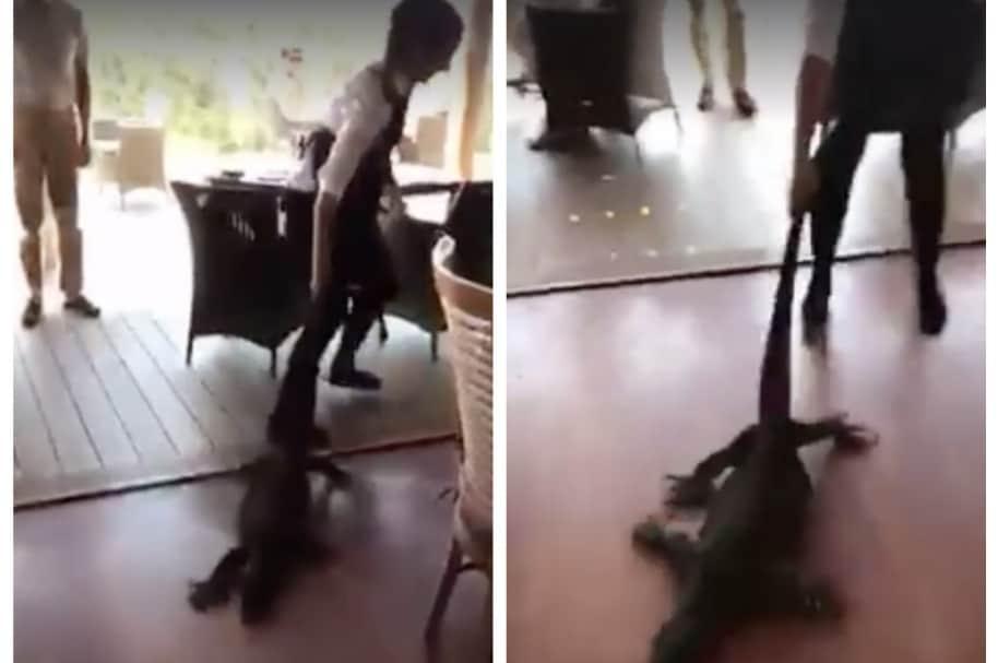 Mesera saca enorme lagarto de restaurante en Australia. Pulzo.com