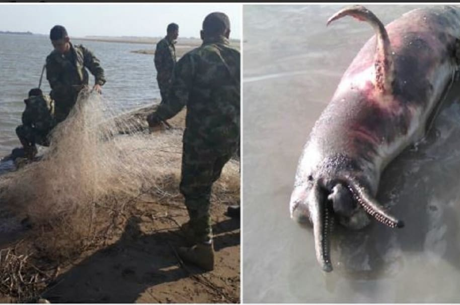 Caza a delfines