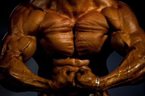 Músculos