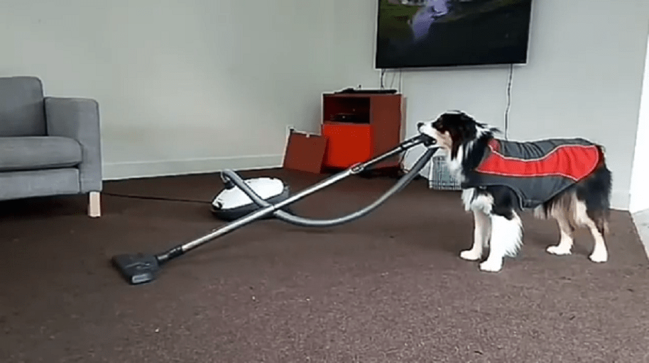 Perro haciendo cosas de humanos