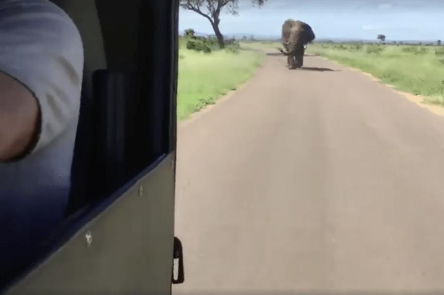 Elefante persigue a turistas que hacían safari en África. Pulzo.com