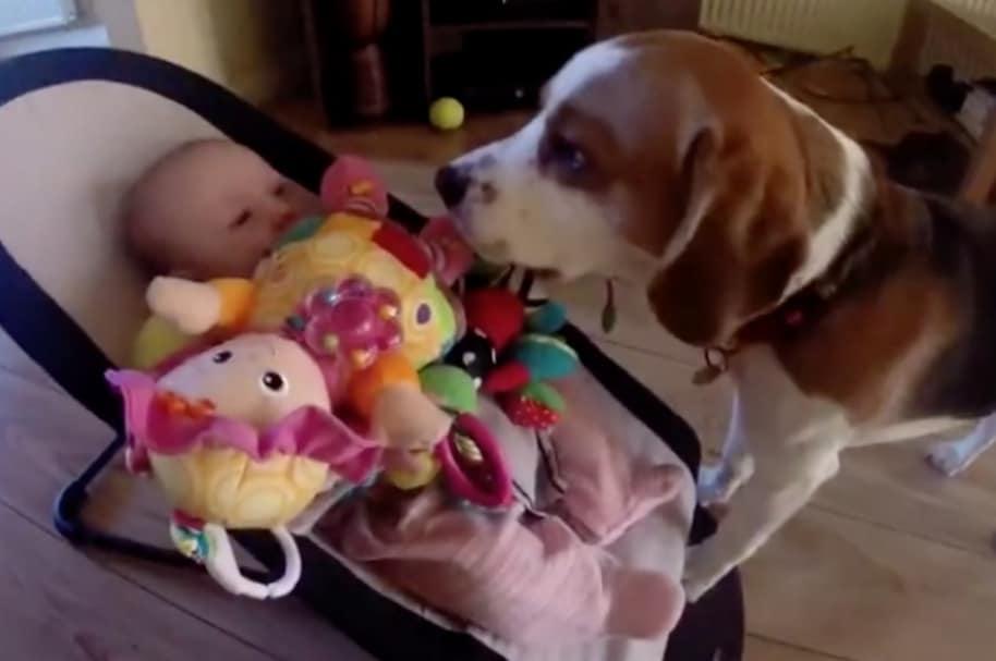 Perro se disculpa con bebé.