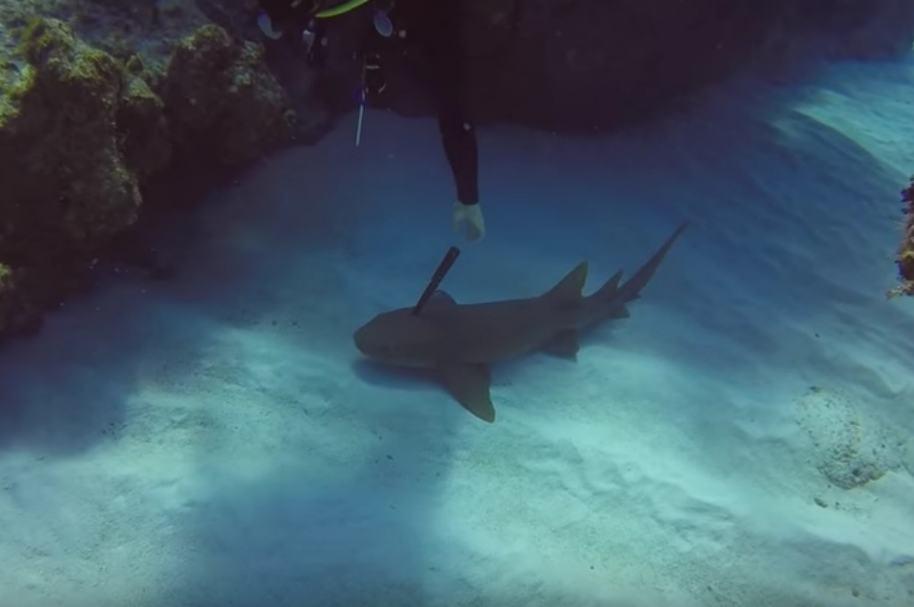 Buzo salva a tiburón.