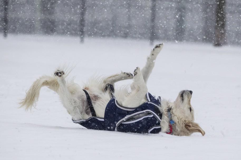 Perro caído en la nieve (imagen de referencia)