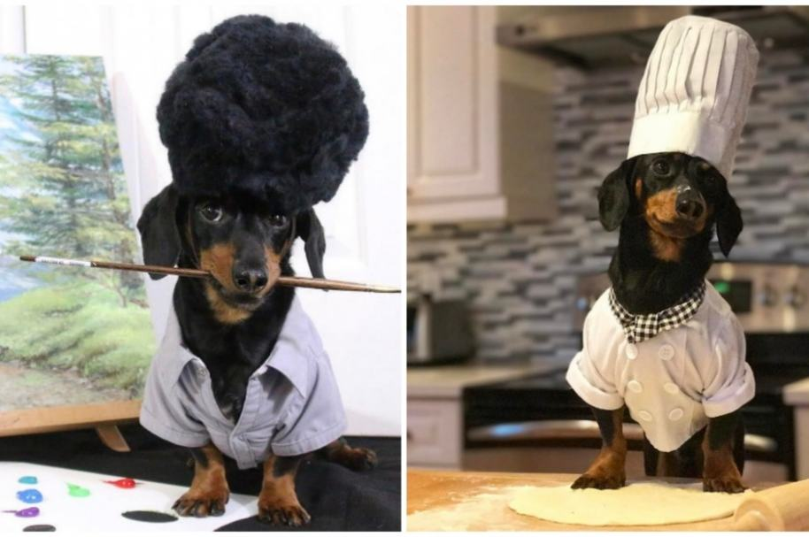 Crusoe, perro viral en redes.