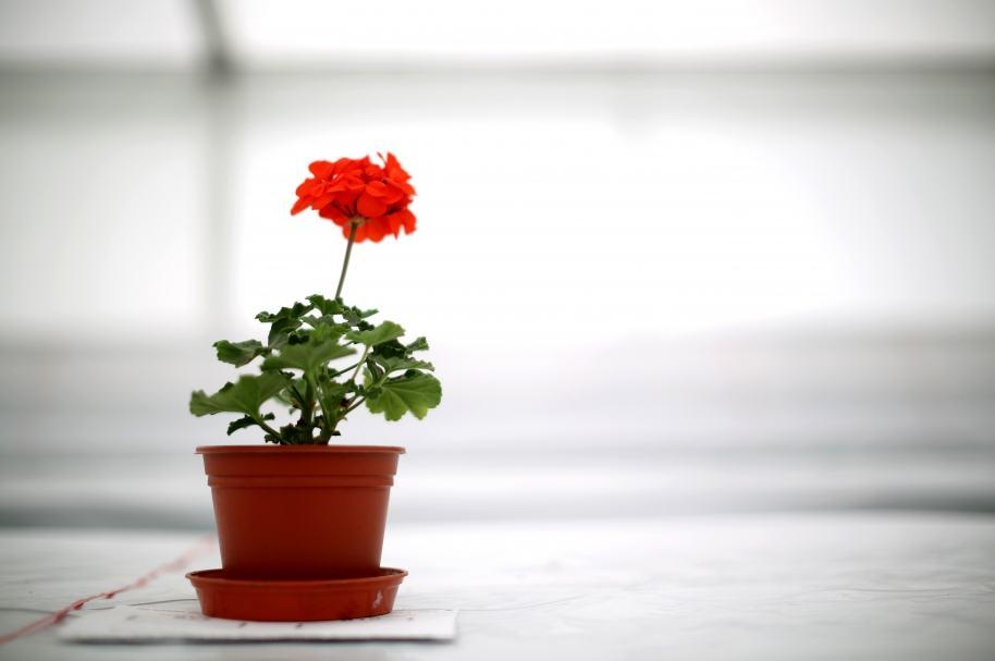 Flor en maceta.