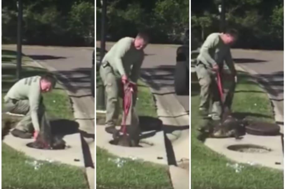 Hombre 'pelea' contra cocodrilo.