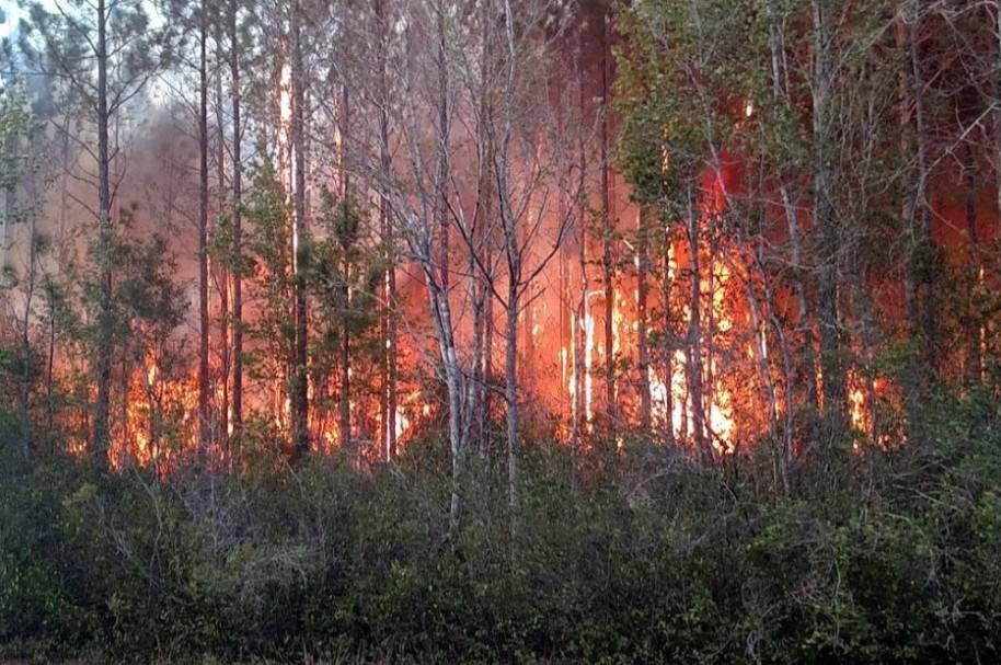 Incendio en la Florida por quema de libros