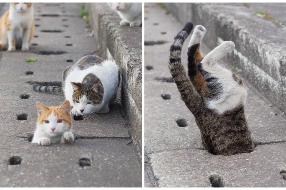 Gatos jugando en la calle