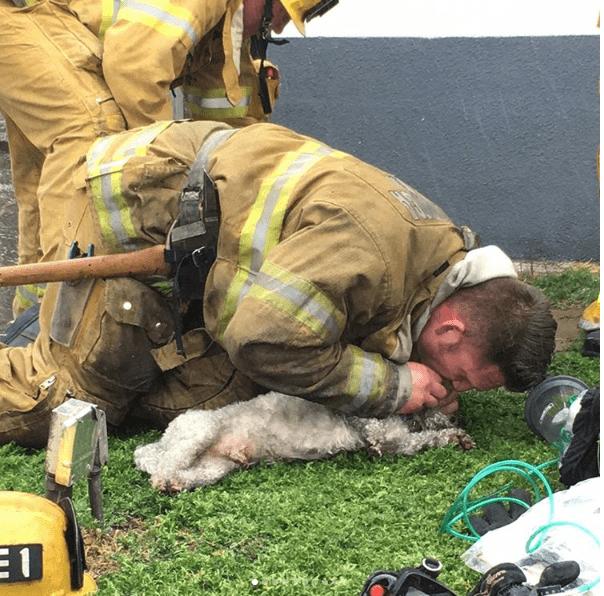 Momento en el que el bombero salva al perro