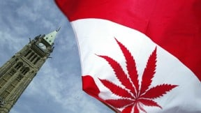 Bandera de Canadá con hoja de marihuana