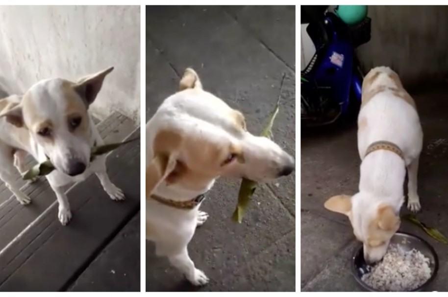 Perro intercambia una hoja por comida.