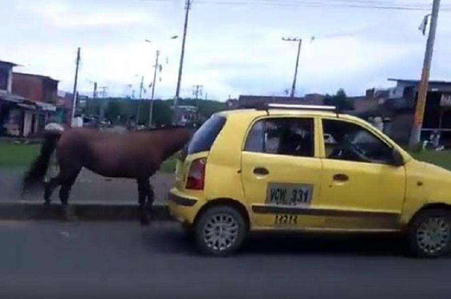 Caballo halado de taxi en Cali