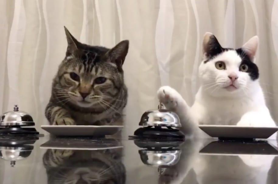 Gatos tocan la campana.