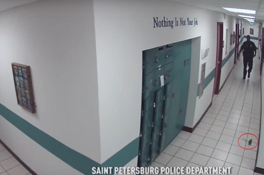 Policía que se llevó un gran susto al ver una rata. Pulzo.com
