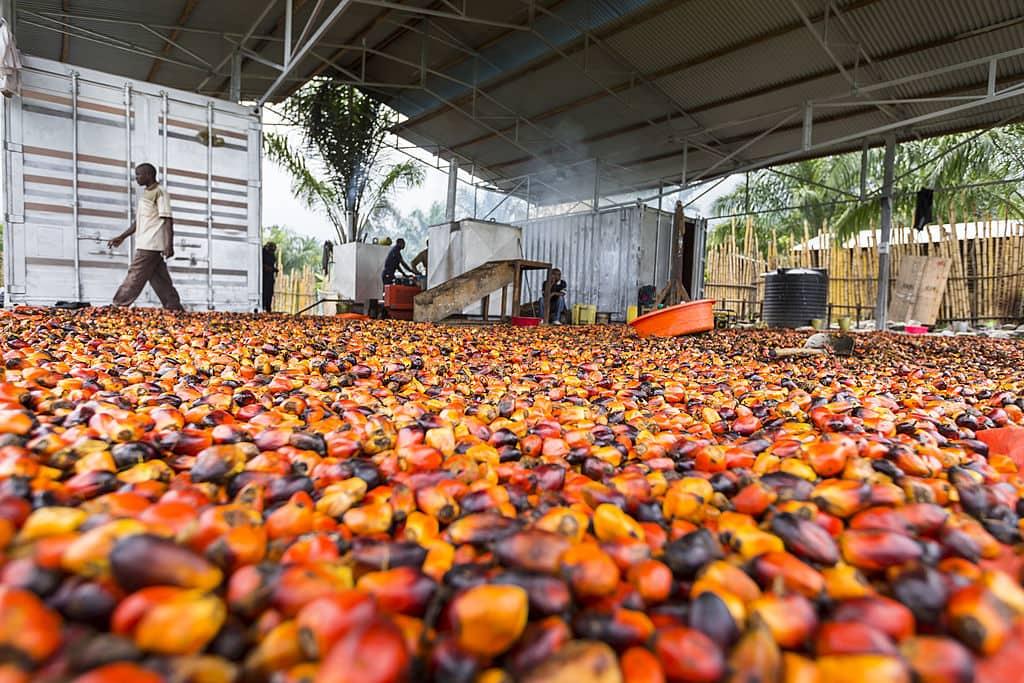 Retiran productos hechos con aceite de palma en España