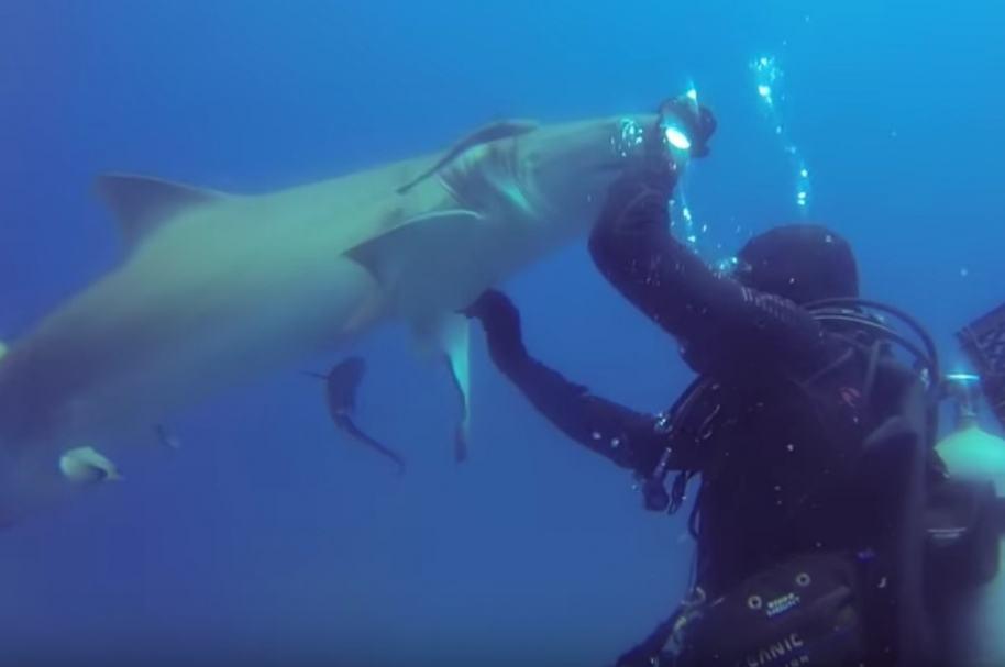 Buzo le quita anzuelo a tiburón.
